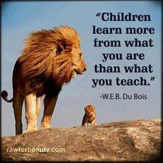 lion learning teaching